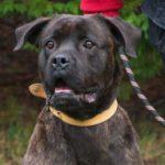 SPA chien à adopter Pumba