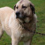 SPA chien à adopter Masti