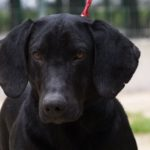 SPA chien à adopter Kong