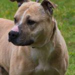 SPA chien à adopter Nala