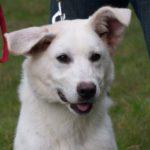 SPA chien à adopter Lana
